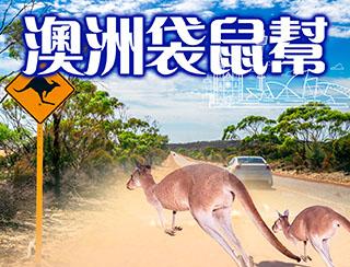 澳洲袋鼠幫